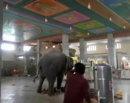 Samayapuram -elephant trampling mahout - 25-05-2018
